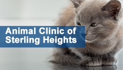 Animal Clinic of Sterling Heights